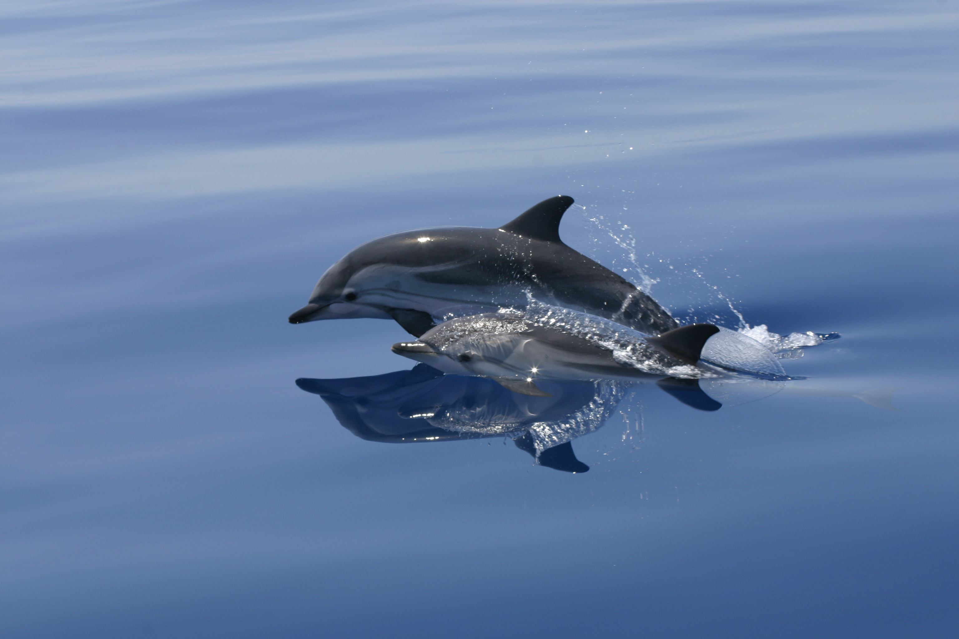 Our Dolphins: Surveying Noise Impacts in Ibiza's Waters