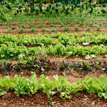 Ibiza Produce: Reinvigorating Rural Landscapes