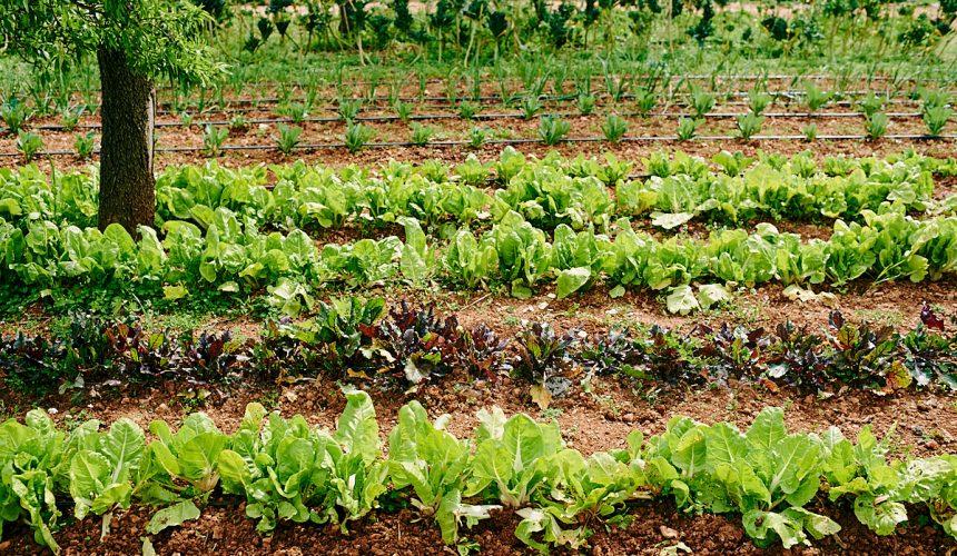 Ibiza Produce: Revitalizar el entorno rural
