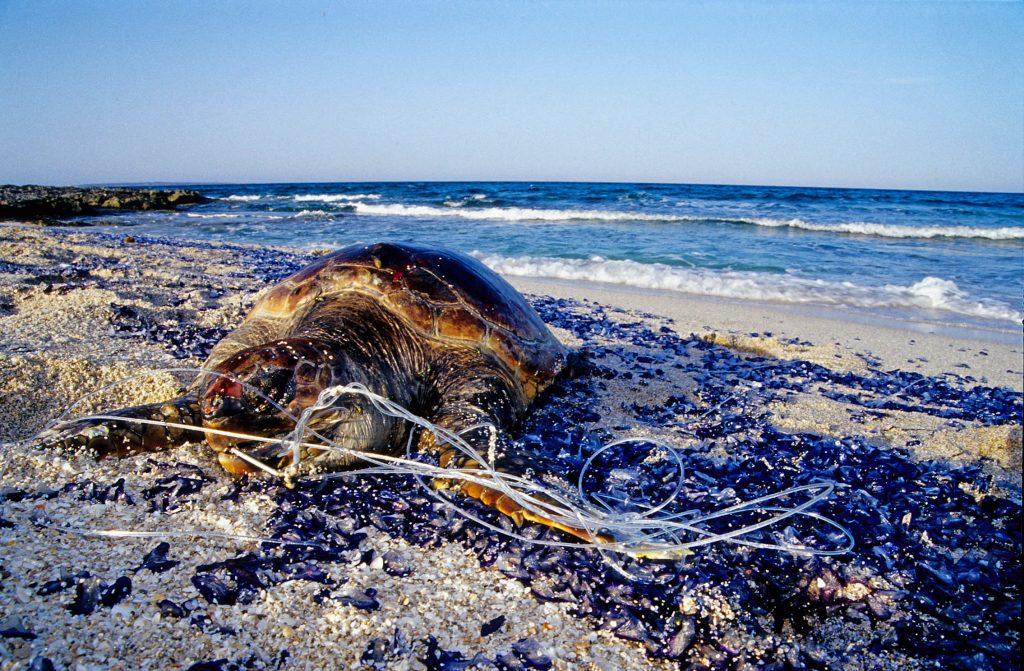 Plastic Free Ibiza and Formentera