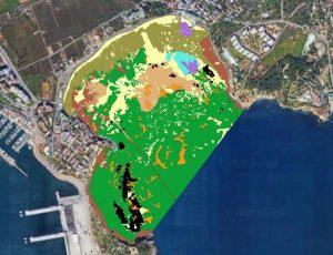 Figura 6. Cartografía bionómica de la bahía de Talamanca, 2018. Las áreas perfiladas en negro son las áreas donde aparece Posidonia oceanica muerta. Elaboración propia (Fuente: Consell d′Eivissa, 2018)