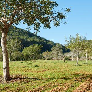 Ibiza registró un aumento del 25% de los gestores de biomasa en 2020